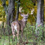 Big buck hunting in Wisconsin_IMG_9533