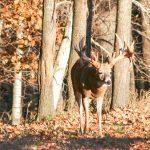 Big buck hunting in Wisconsin_IMG_9831