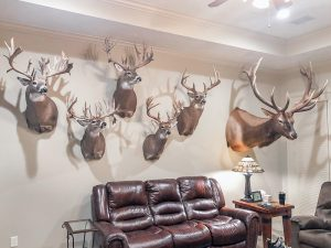 Bucks harvested at Northwoods Antler Lodge in Wisconsin