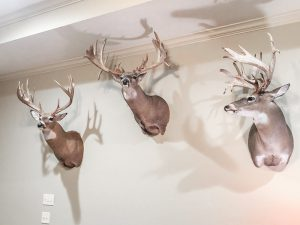 Bucks from Northwoods Antler Lodge - man cave