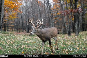Big bucks on the trail cams