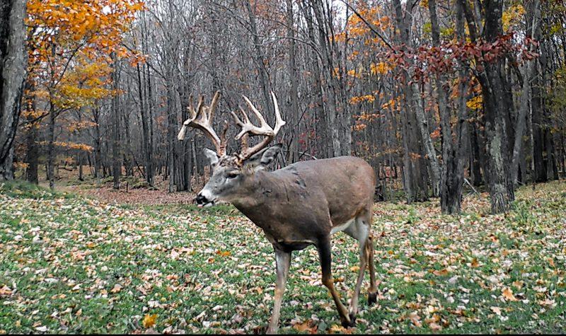 Big bucks on the trail cams