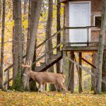 Beautiful enclosed hunting blinds.