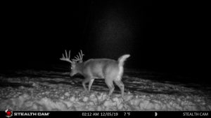 Nighttime trail cams