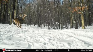 Buck on the run