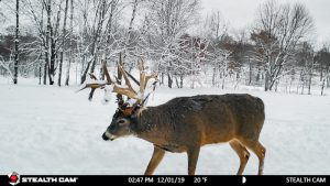 trophy buck in the snow